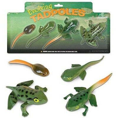 4 Piece Evolving Tadpoles To Frog Rubber Play Set Science Learning School Learn