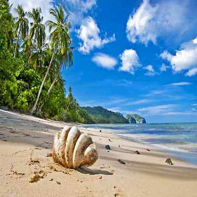 Tropical beach 10'x10' CP Backdrop Computer printed Scenic Background ZJZ-976