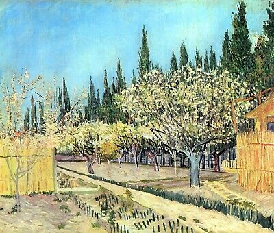 Flowering fruit garden, surrounded by cypress by Van Gogh Giclee Repro on Canvas