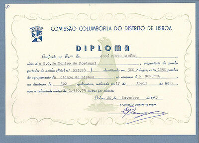 Vintage PIGEON / DOVE Racing Diploma 520km contest. PORTUGAL 1960