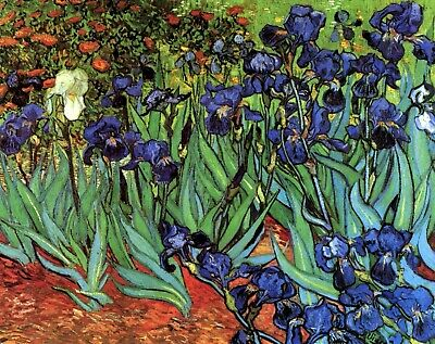 Irises by Vincent Van Gogh Giclee Fine Art Print Reproduction on Canvas