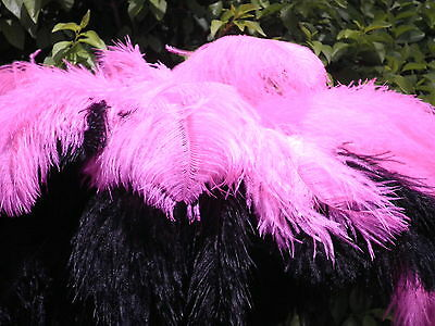 Hot Pink/Black 2 Colour -Blondene Soft Ostrich Feather Fashion Display