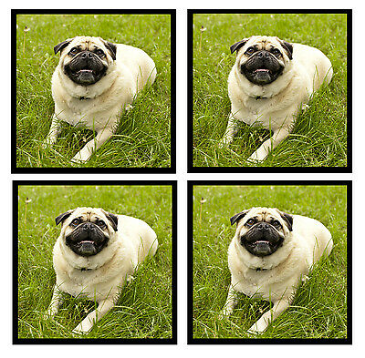 Pug (Lounging) - Coasters - Set Of 4 Fun Coasters - Gift/ Present - Brand New