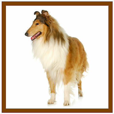 Collie - Coasters - Set Of 4 Fun Coasters - Gift/ Present - Brand New