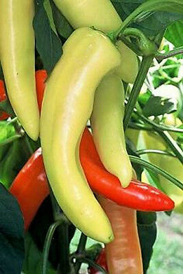 "Hungarian Hot Wax Pepper *Heirloom* (50 Seed's) ""FREE SHIPPING""<Non-GMO>"