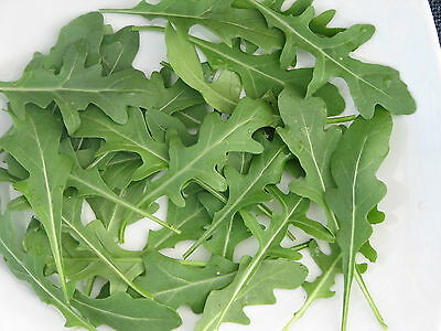 Herb  Rocket Wild  9000 Seeds