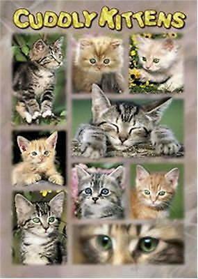ART POSTER~9 Cuddly Kittens Collage In Home Garden Cute Sleeping,Awake,Aware~NEW