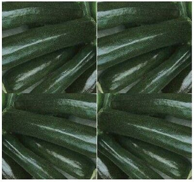 BLACK BEAUTY ZUCCHINI Squash seed - GREAT TASTE ~ EXCELLENT flavor - 55 - 60 Day