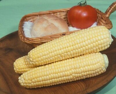 Organic  Vegetable Sweet Corn Golden Bantam Sweetcorn  35 Seeds
