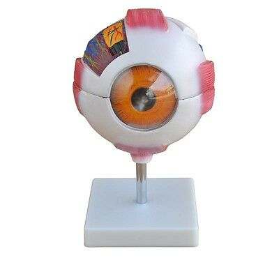 Giant Eye Model - New - 6 X Life Size Anatomy Model