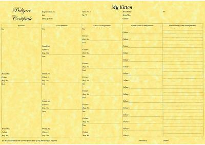 5 Generation Pedigree form Certificate Print on Quality Paper Kitten Breeder x10