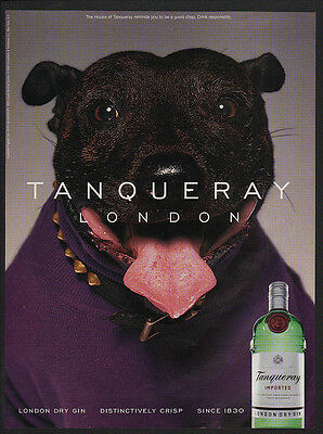 1999 Cute PIT BULL TERRIER Dog Purple Sweater - TANQUERAY London Gin VINTAGE AD