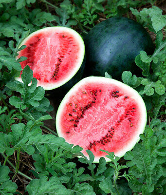 Vegetable  Water Melon Sugar Baby  20 Finest Seeds  **Free Uk P&P**