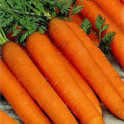 Vegetable  Carrot  Resistafly F1   1300 Finest Seeds