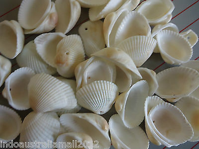 15 x Natural Sea Shell Beads Tribal Jewelery Craft White 1mm Hole -PTS058Y