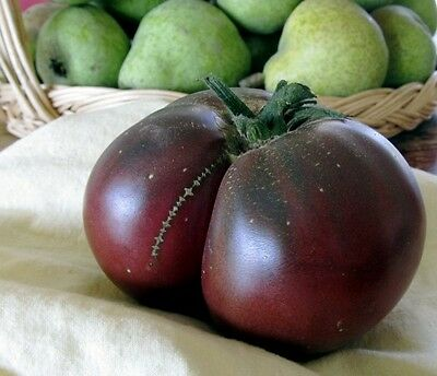 Organic Vegetable Tomato Brandywine Black 600 Finest Seeds Bulk