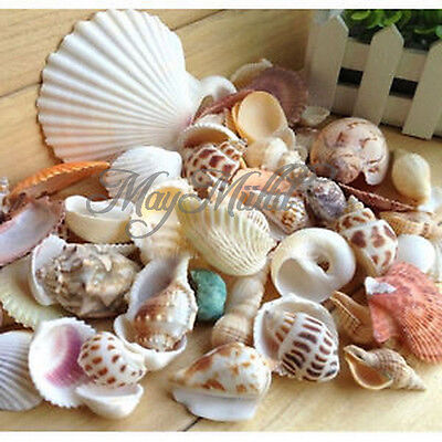 Approx 130g Beach Mixed SeaShells Mix Sea Shells Craft SeaShells Aquarium S