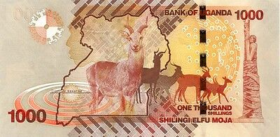 UGANDA ( 2010 )  1000 SHILLINGS  BANK NOTE in a protective sleeve