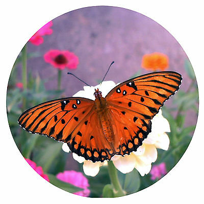 Orange Butterfly - Fun Novelty Round Fridge Magnet - Brand New - Gift / Xmas