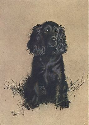 Reproduction Print on A4 - Cecil Aldin  - A Dozen Dogs or So - Cocker Spaniel