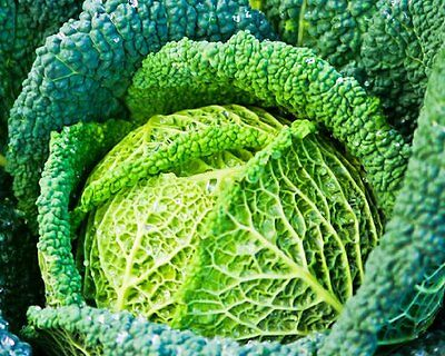 Vegetable  Cabbage Savoy Winter King 3  4 Gram ~ 1600 Seeds