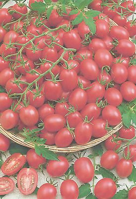 Vegetable Tomato Cherry Pink Grape 100 Finest Seeds