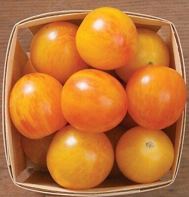 Vegetable Tomato Cherry Artisan Golden  Bumblebee 10 Finest Seeds
