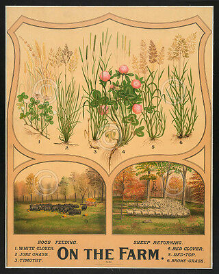 On the Farm by Vintage Reproductions Plants Nature Print Poster 15.5x12