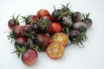 Vegetable Tomato Cherry Indigo Blue Berries 10 Finest Seeds