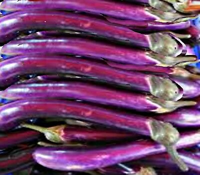 Eggplant Long Purple  100 seeds Vegetable seeds HEIRLOOM VEGETABLE GARDEN SEEDS
