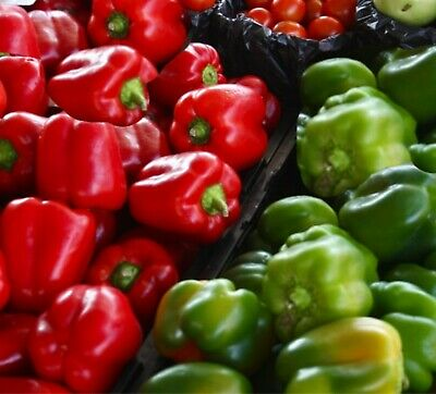 Capsicum California Wonder 30  seeds heirloom vegetable garden seeds