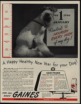 1946 WIRE HAIR FOX TERRIER Loves GAINES Dog Food VINTAGE AD