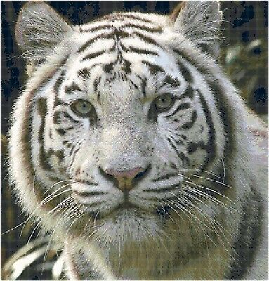 Cross Stitch Chart Pattern A White Tiger Needlework Picture Design Craft