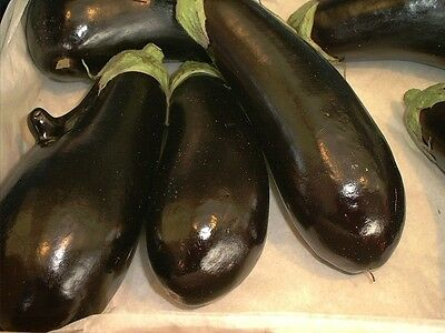 Vegetable  Aubergine  Moneymaker F1  40 Seeds