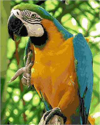 Cross Stitch Chart Pattern Blue Gold Macaw Needlework Picture Design Craft