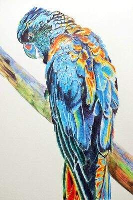 Signed Matted Print Painting Parrot Cockatoo Australian Bird Wall Art A4 Size