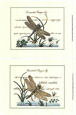 (2) Denis Diderot Art Poster Print Of Dragonfly Antique Vintage Look Heavy Stock
