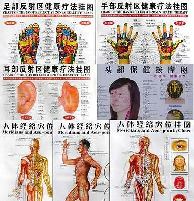 7 Poster Charts -Acupuncture Human Body Charts Meridians and Acupuncture Points