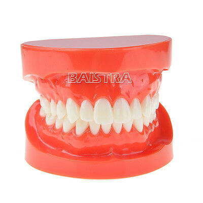 Dental Adult Standard Typodont Demonstration Teeth Model Jaw Model #7004 HOT