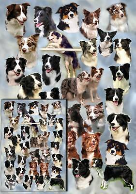 Border Collie Dog Gift Wrapping Paper By Starprint