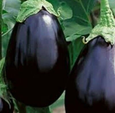 Eggplant Black Beauty 50 seeds Vegetable seeds