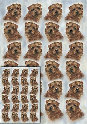 Norfolk Terrier Dog Gift Wrapping Paper by Starprint - Visit our shop