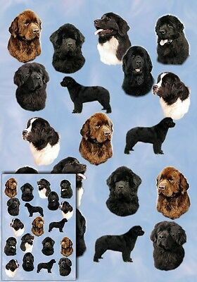 Newfoundland Dog Gift Wrapping Paper By Starprint - Auto Combined Postage
