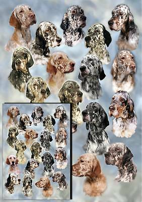 English Setter Gift Wrapping Paper By Starprint