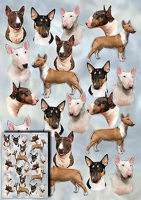 Bull Terrier Dog Gift Wrapping Paper By Starprint - Auto combined postage