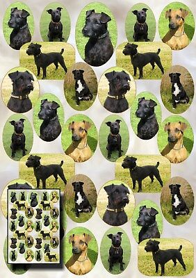 Patterdale Terrier Dog Gift Wrapping Paper - Starprint