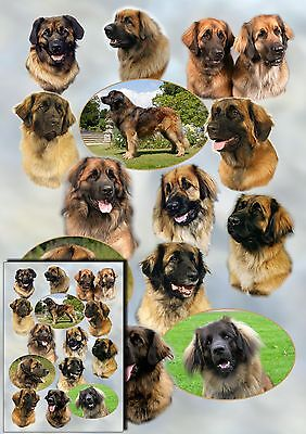 Leonberger Dog Gift Wrapping Paper By Starprint