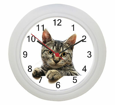 Tabby Cat Wall Clock !  Our Photo Or Put Your Own Cat on a Clock !