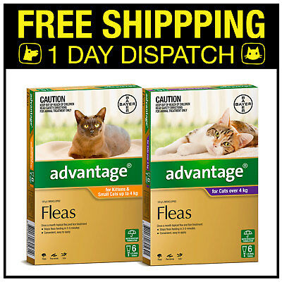 Advantage Flea Spot On Treatment For Kittens & Cats 6 Pack - All Sizes