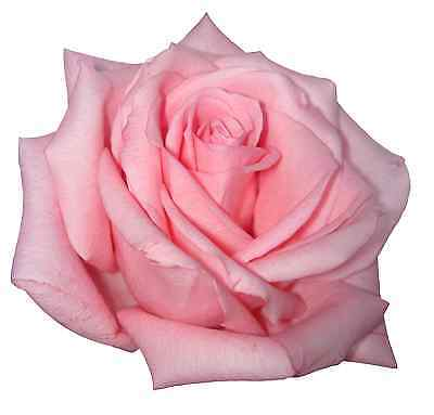 30 Premium Pink Rose Flowers Edible Flat Rice Paper Cup Cake Toppers D2